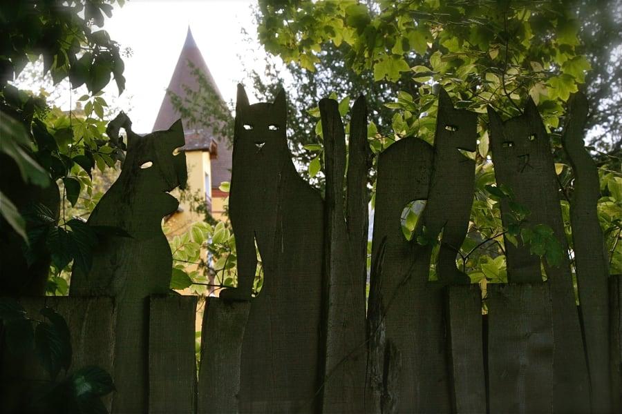 slava clown house cat fence