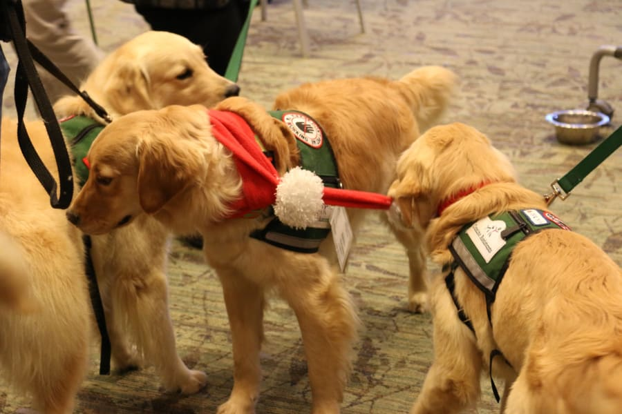 Emory therapy dog 1
