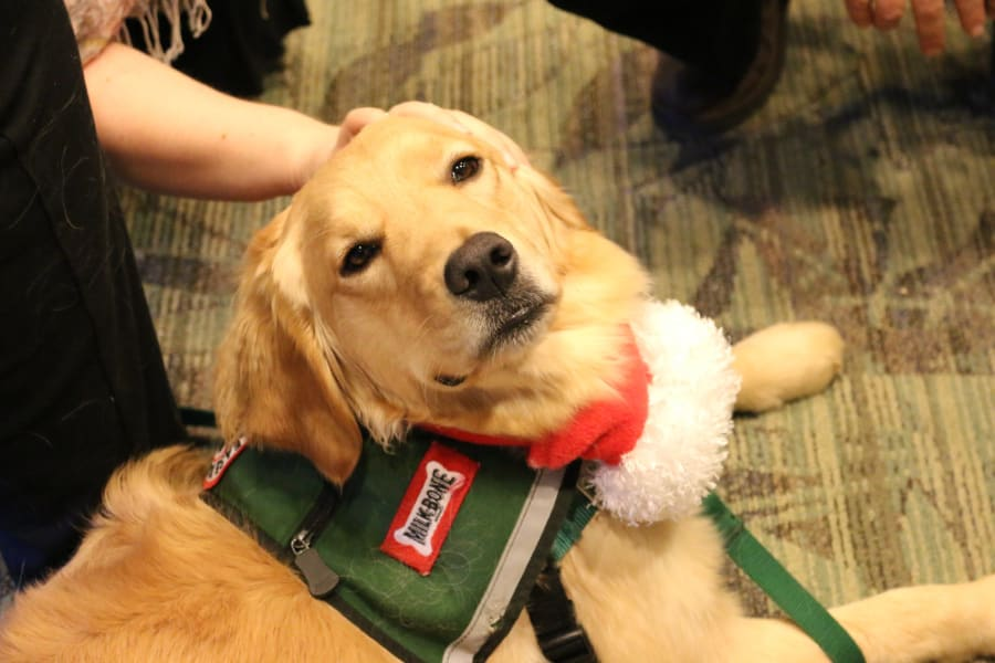 Emory therapy dog 2