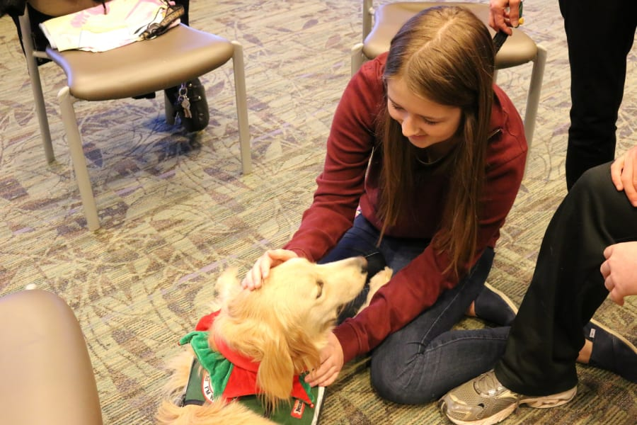 Emory therapy dog 3