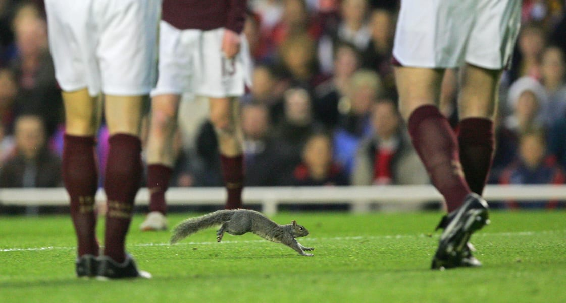 Highbury squirrel