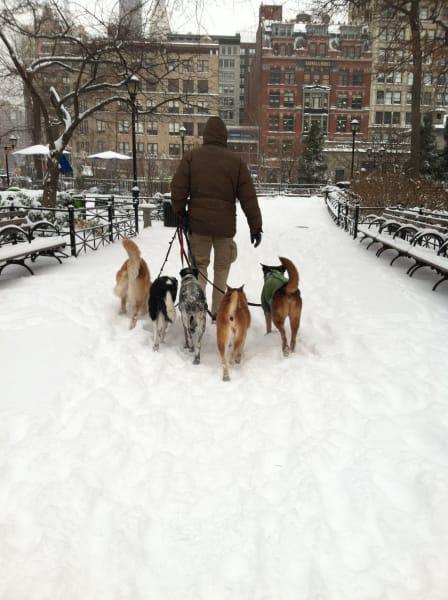 irpt dogs in snow 1