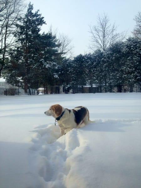 irpt dogs in snow 5