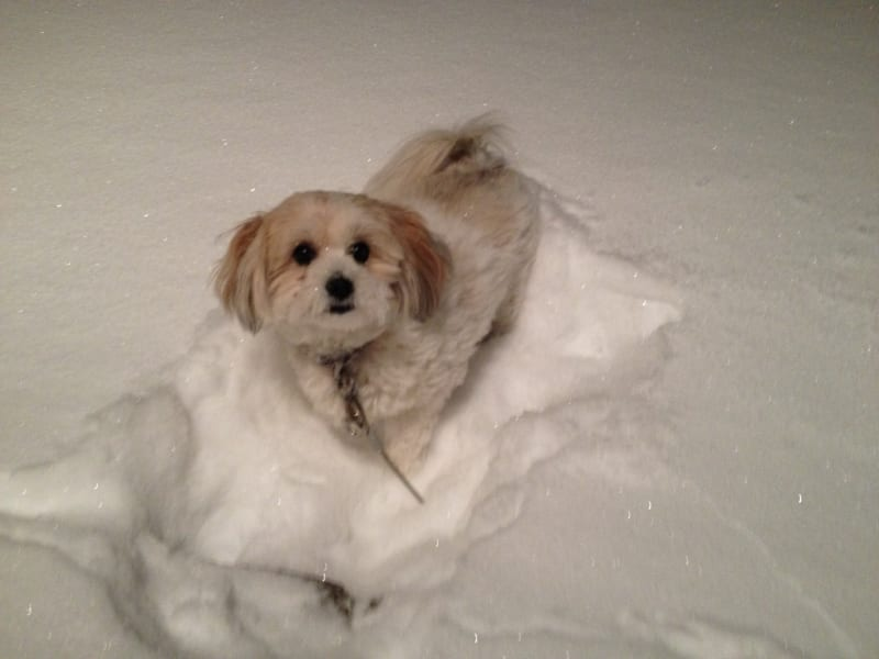 irpt dogs in the snow
