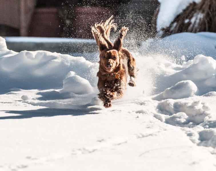 dogs in snow 22