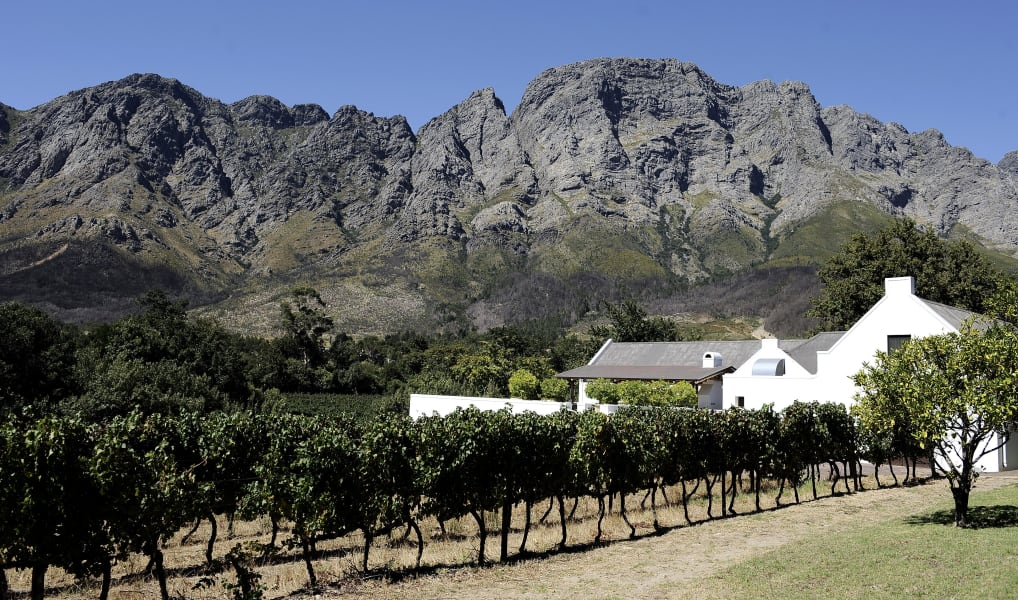 south african vineyard Franschoek