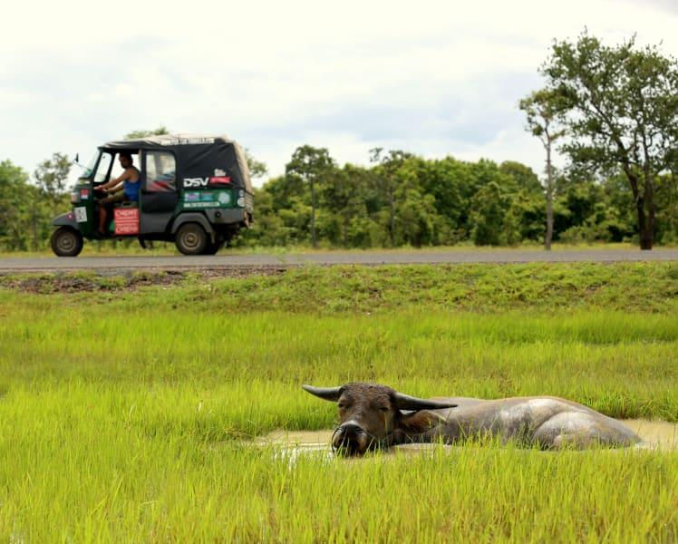 Tuk tuk world tour — rice paddies in cambodia