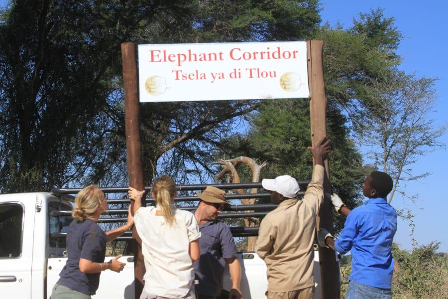 elephants without borders 3