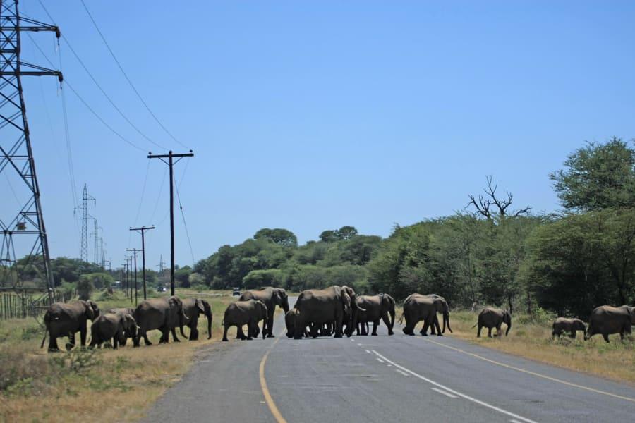 elephants without borders 4