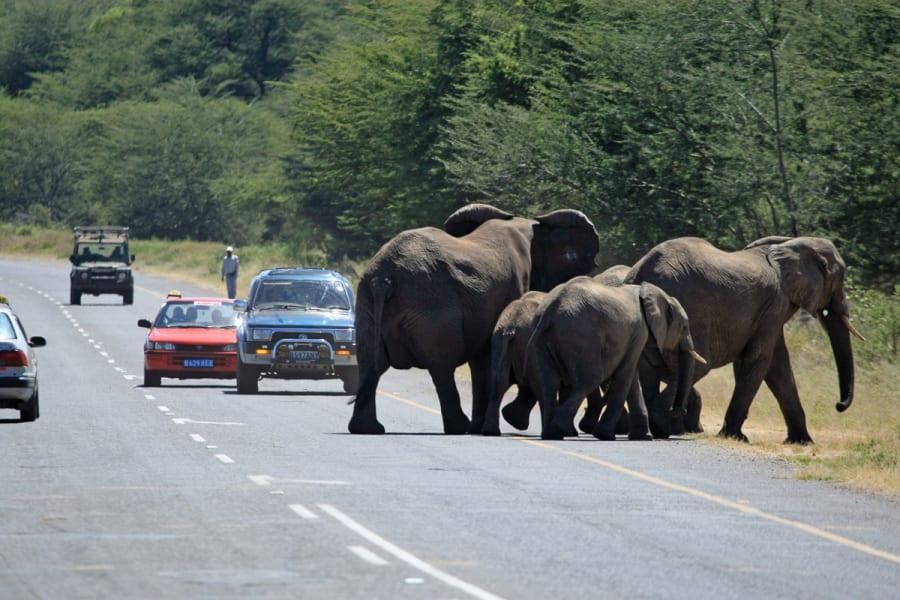 elephants without borders 5