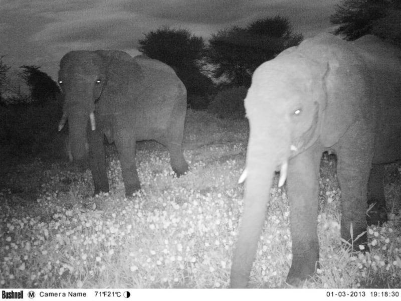 elephants without borders 6