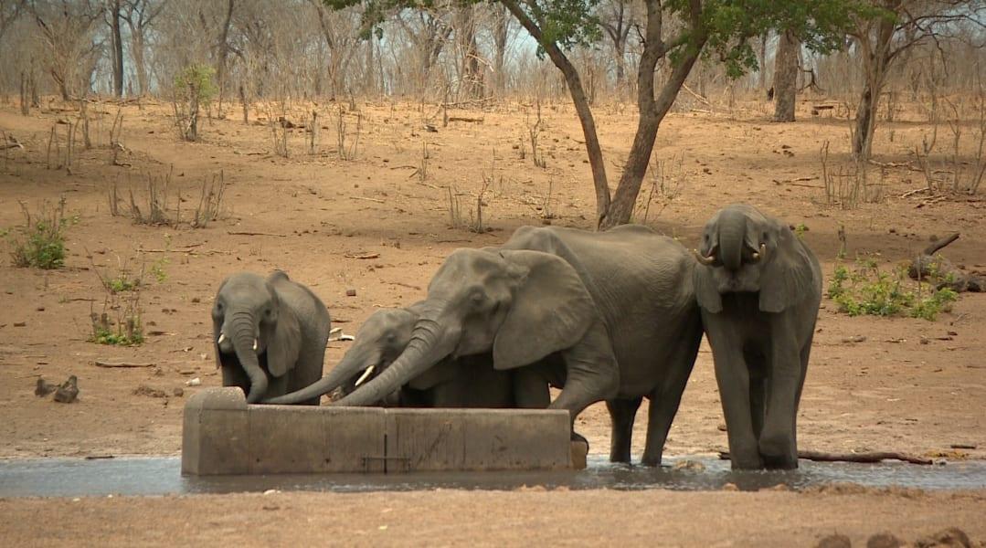 elephants without borders 8