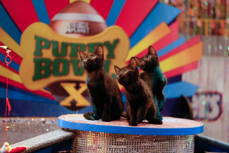 01.puppy-bowl-kittens
