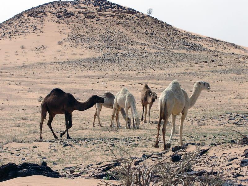 Saudi Arabia dinosaur fossils location