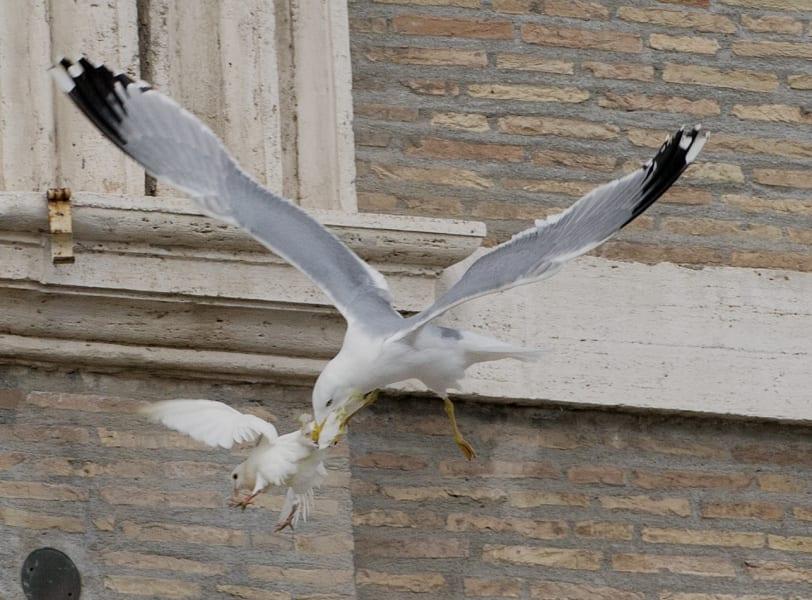 05 pope doves 0127