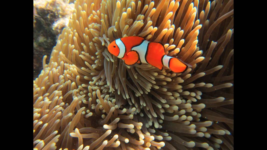 01_barrier reef