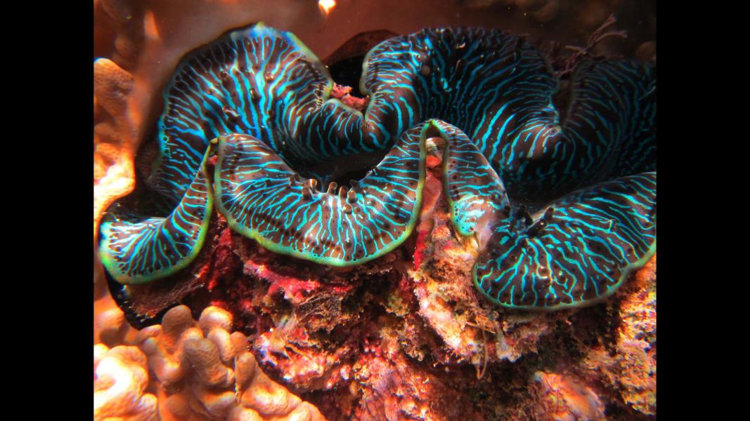 02_barrier reef