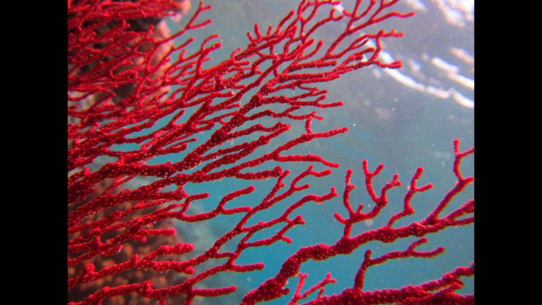 06_barrier reef