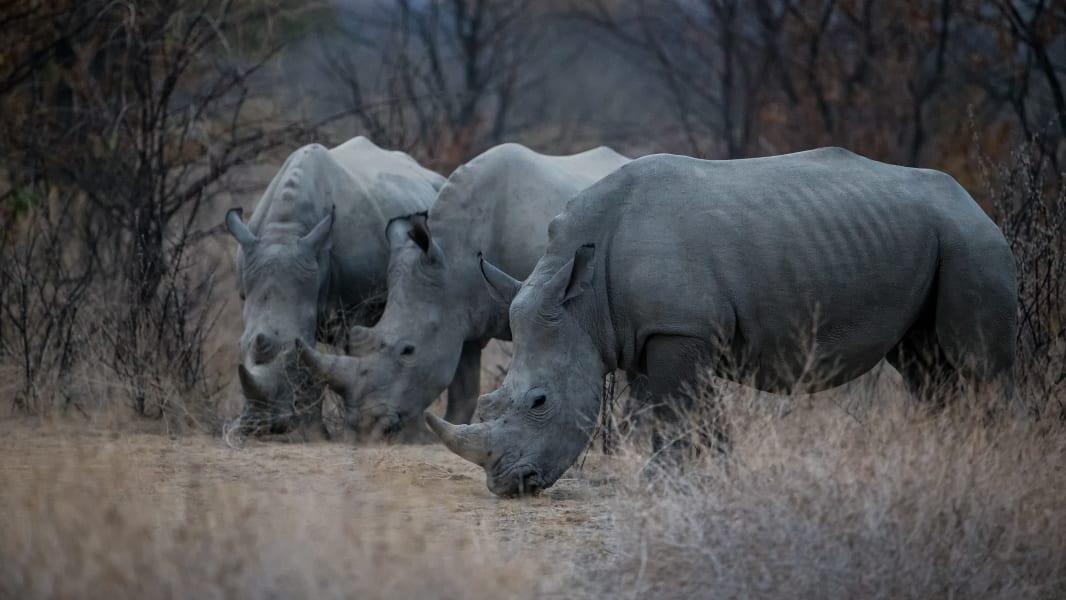Million Dollar Safari - Palmwag Concession Namibia