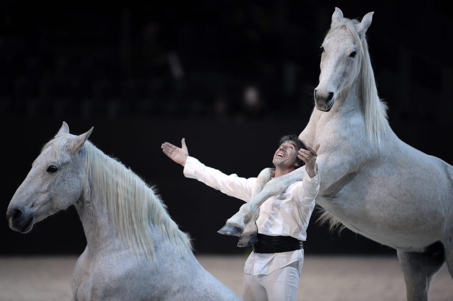 horse dance performance