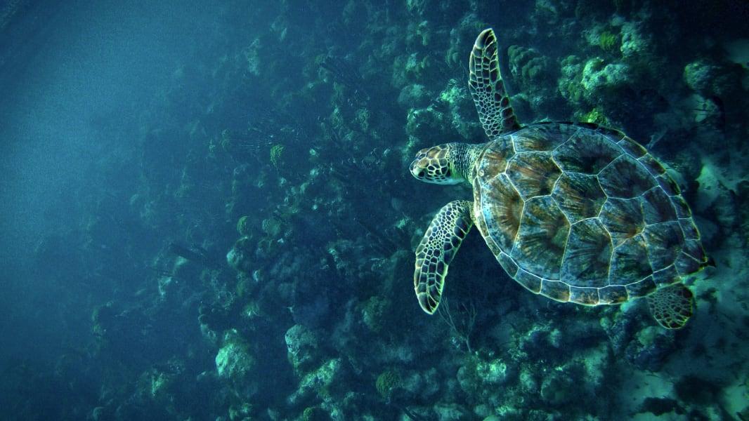 turtle.irpt