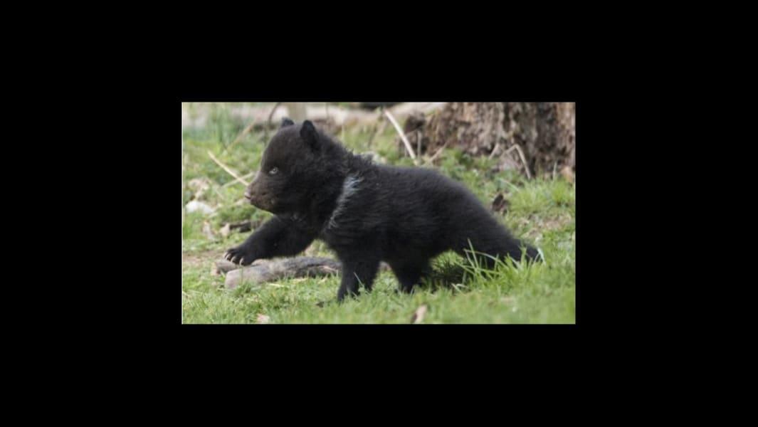 Bern Zoo bear