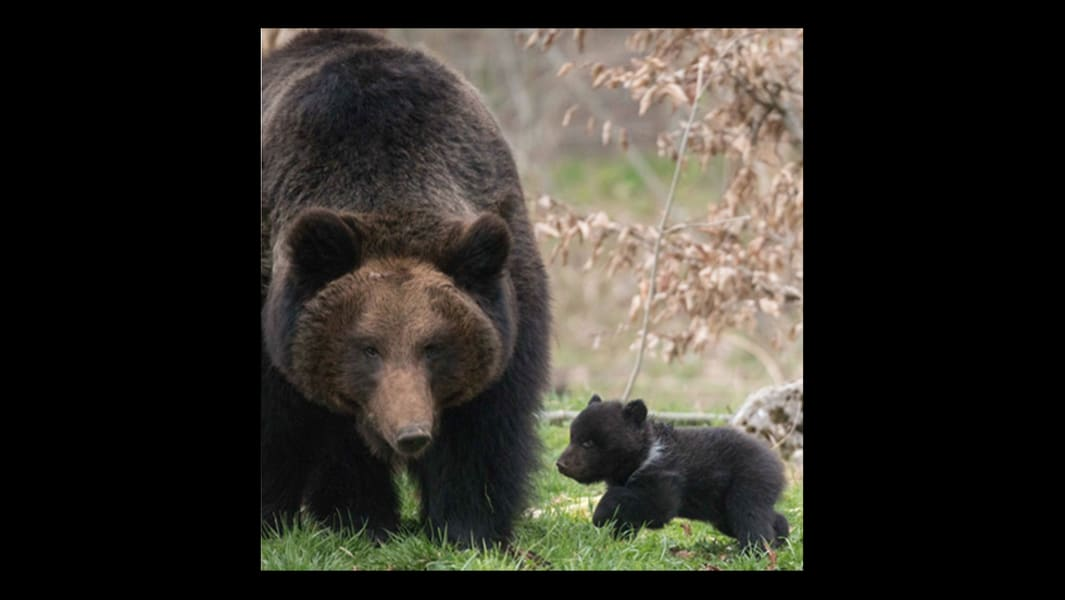 Bern Zoo bear 3