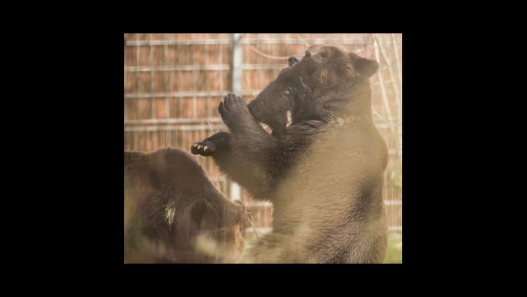 Bern Zoo bear 4