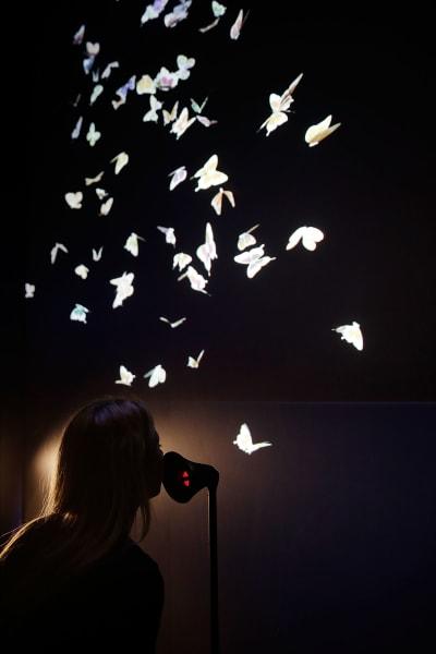 digital rev butterflies