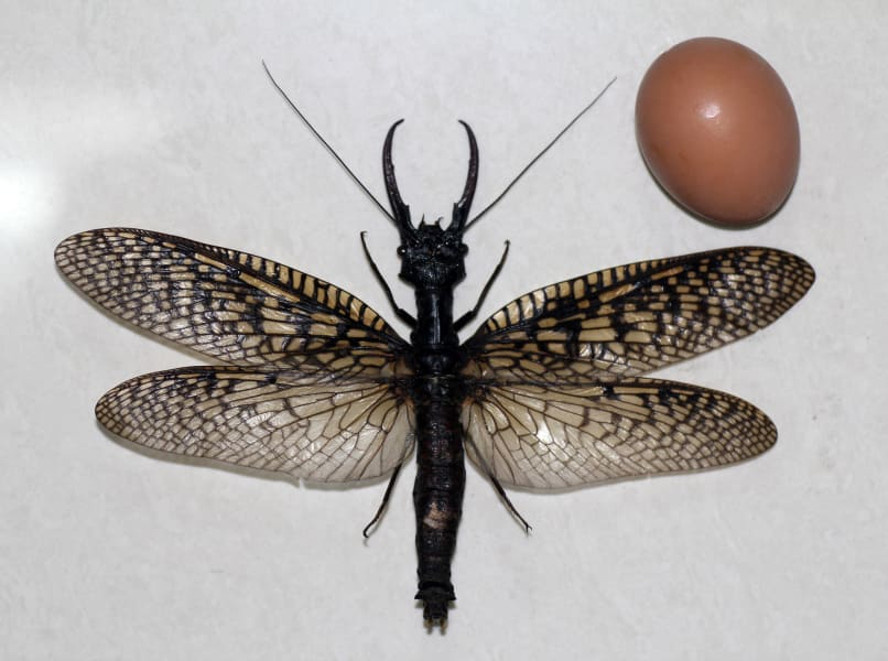 giant bug china