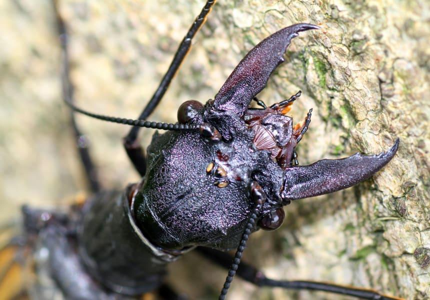 giant bug china 5
