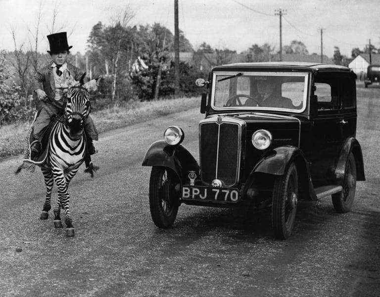 ride zebra