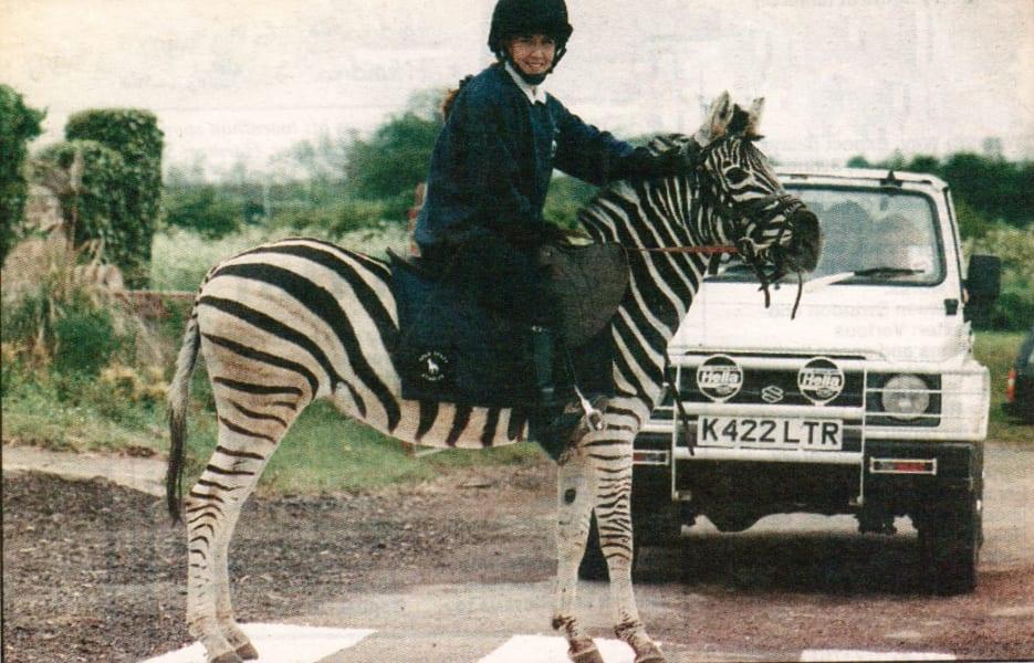 Gary Witheford zebra