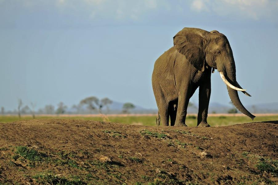 Safari ebola elephant tanzania