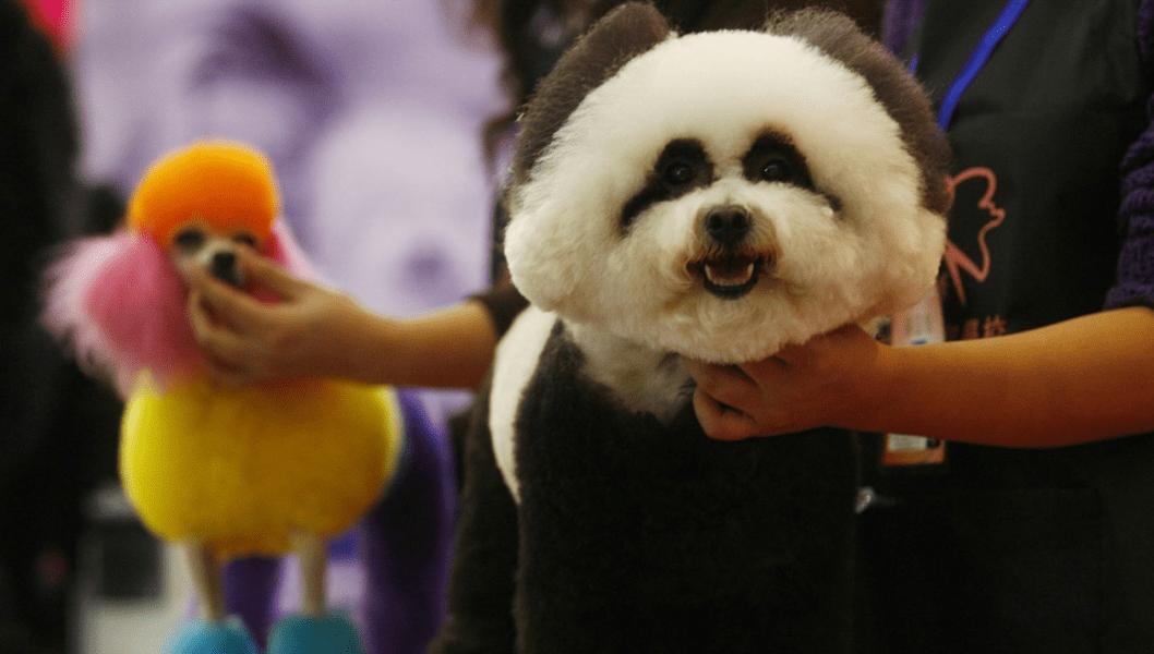 china pets dog 1