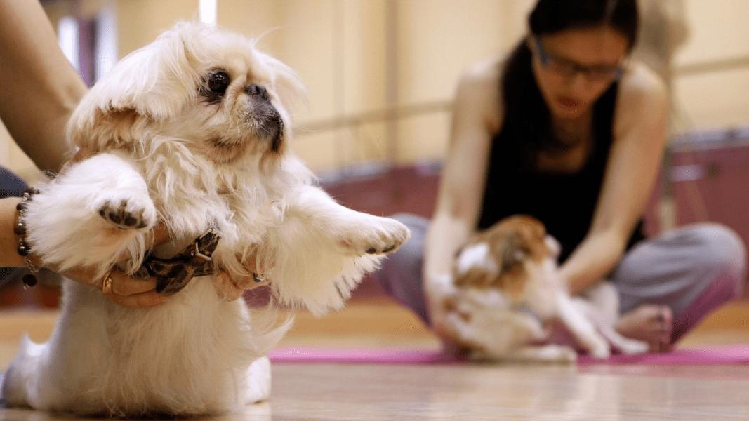 china pets dog 2