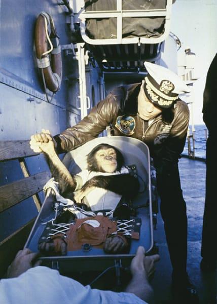 ham space monkey