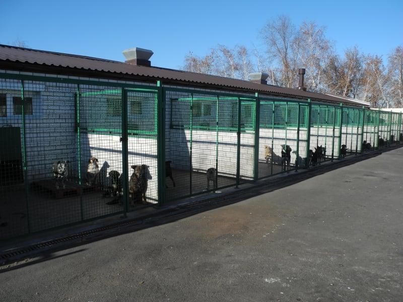 Donetsk dog shelter