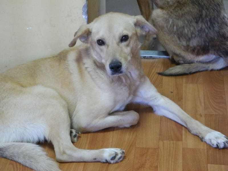Donetsk dogs 1