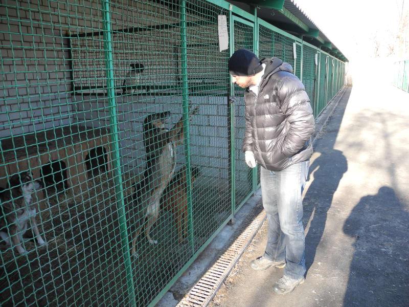 Donetsk dogs 3