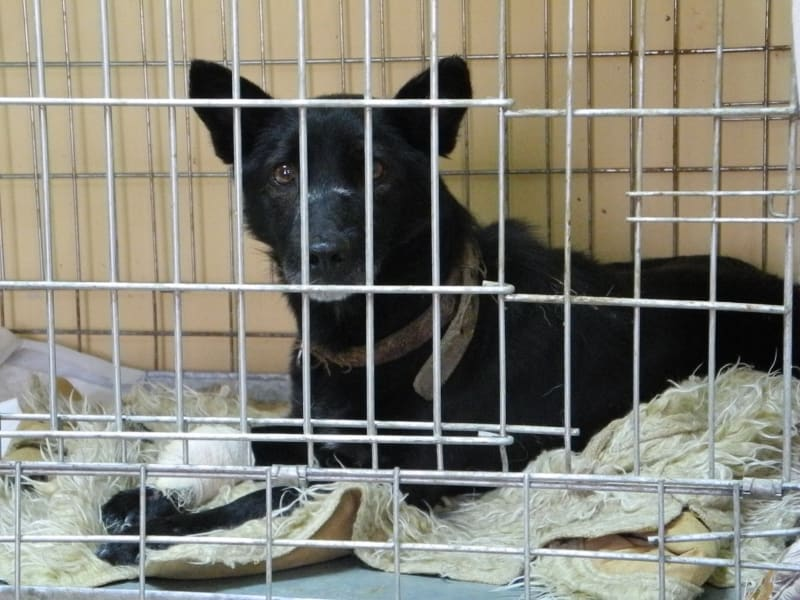 Donetsk dogs 4