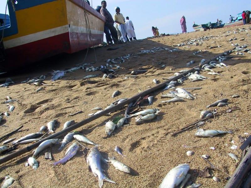 11 indian ocean tsunami 2004