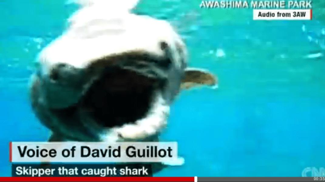 tiburon4