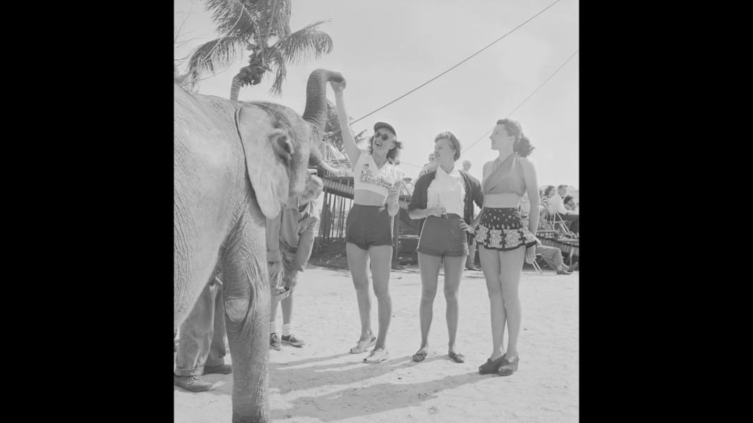05 ringling elephants RESTRICTED