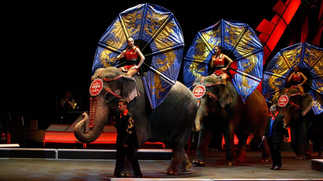 14 ringling elephants