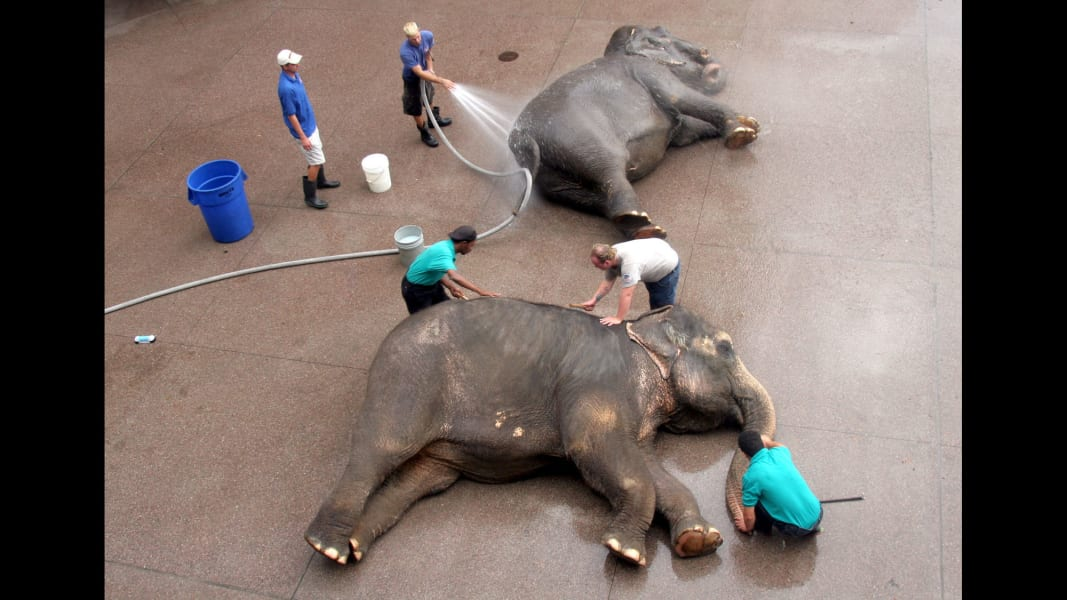 15 ringling elephants RESTRICTED