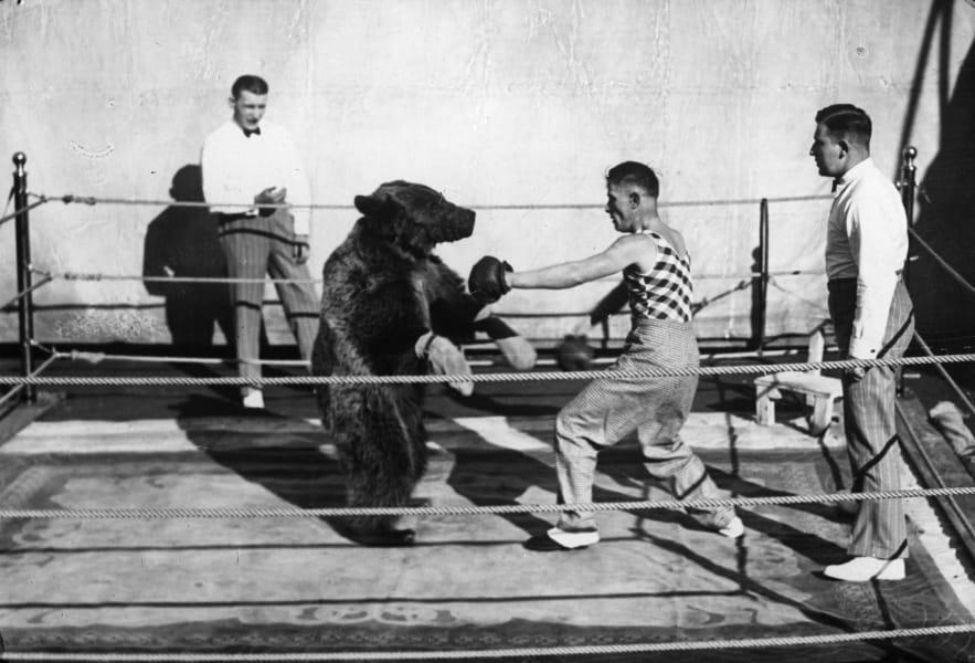 01 circus acts -bears