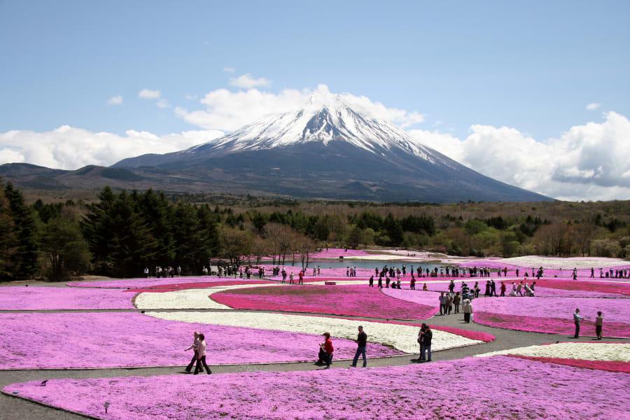 beautiful japan Fuji Shibazakura Festival Yamanashi