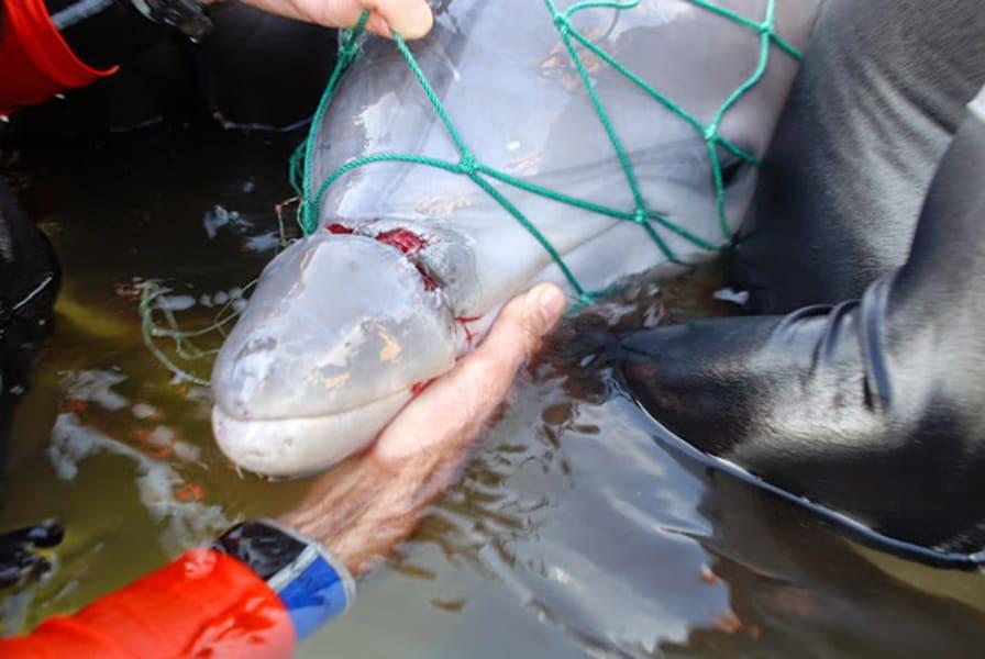 01.dolphin-calf.DSC_0158