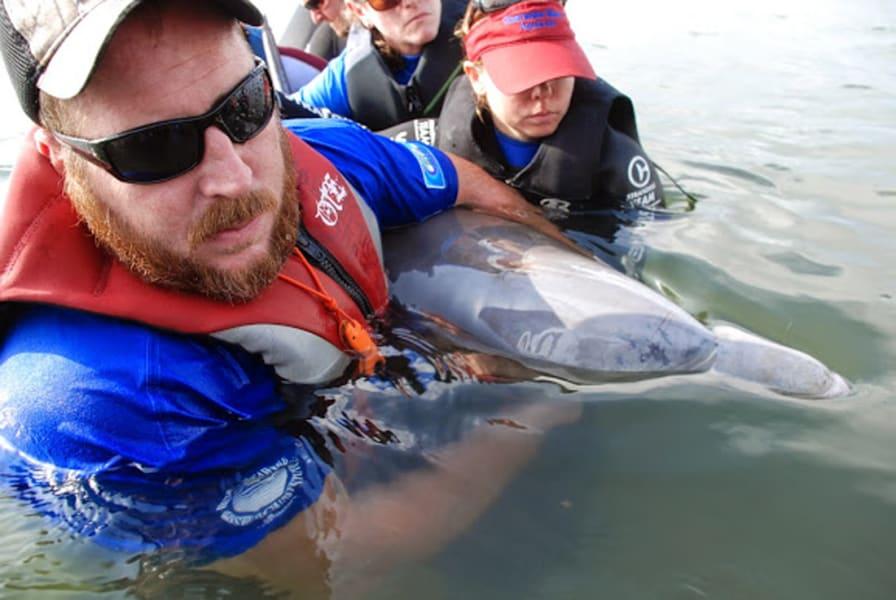 06.dolphin-calf.DSC_0430